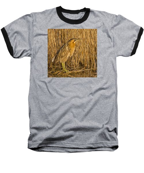 Bittern Botaurus Stellaris Baseball T-Shirt