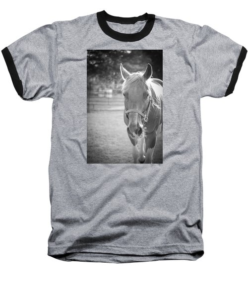 Black And White Portrait Of A Horse In The Sun Baseball T-Shirt by Kelly Hazel