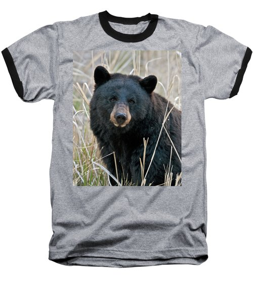 Black Bear Closeup Baseball T-Shirt