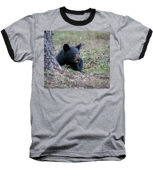 Black Bear Resting Baseball T-Shirt