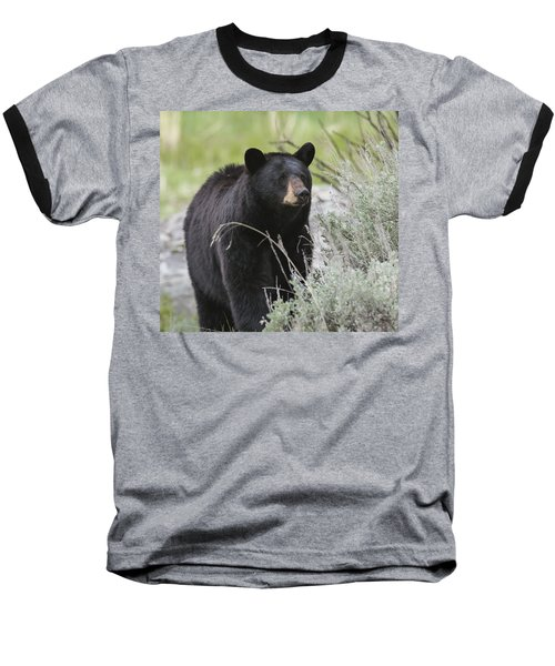 Black Bear Sow Baseball T-Shirt