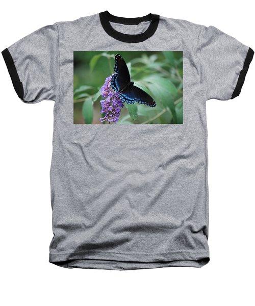 Black Beauty Baseball T-Shirt by Lori Tambakis