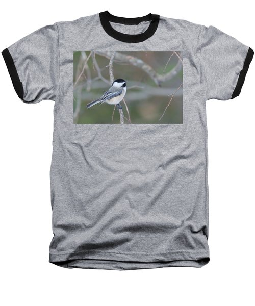 Black Capped Chickadee 1379 Baseball T-Shirt