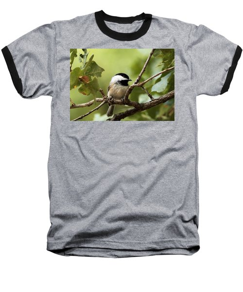 Black Capped Chickadee On Branch Baseball T-Shirt by Sheila Brown