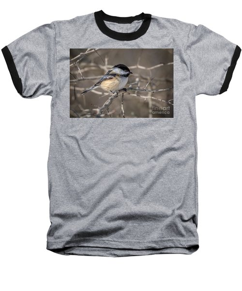 Black-capped Chickadee Iv Baseball T-Shirt