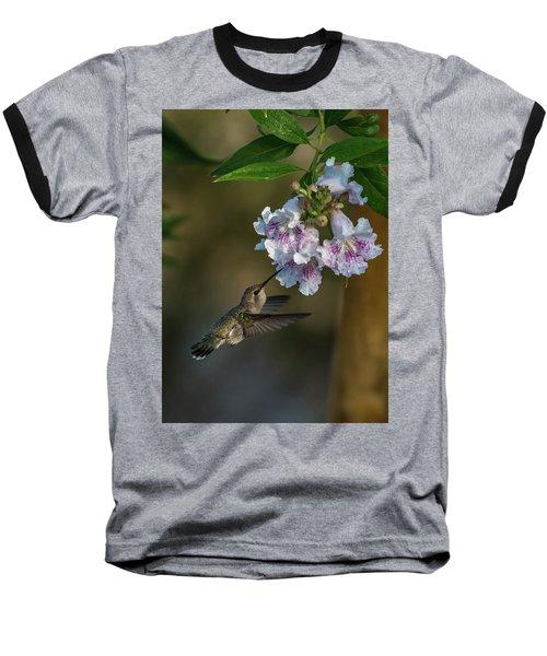 Black-chinned Hummingbird Baseball T-Shirt