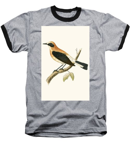 Black Eared Wheatear Baseball T-Shirt by English School