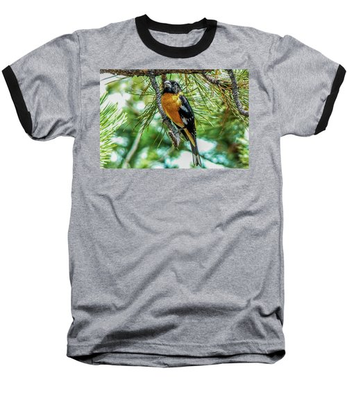 Black-headed Grosbeak On Pine Tree Baseball T-Shirt by Marilyn Burton