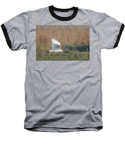 Black-headed Ibis 01 Baseball T-Shirt