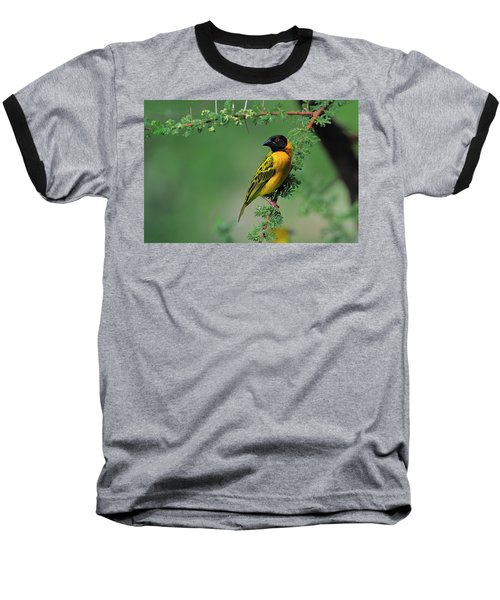 Black-headed Weaver Baseball T-Shirt