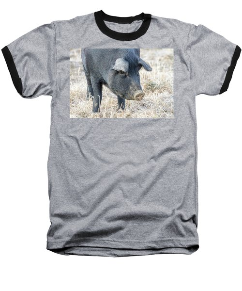 Baseball T-Shirt featuring the photograph Black Pig Close-up by James BO Insogna