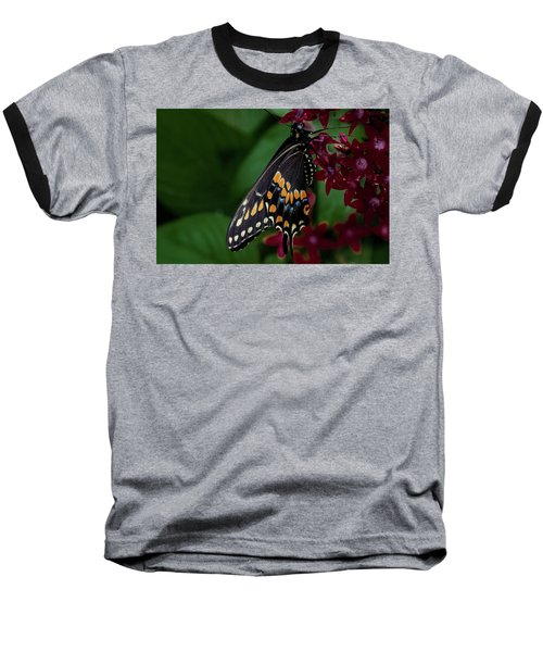 Baseball T-Shirt featuring the photograph Black Swallowtail Butterfly by Jay Stockhaus
