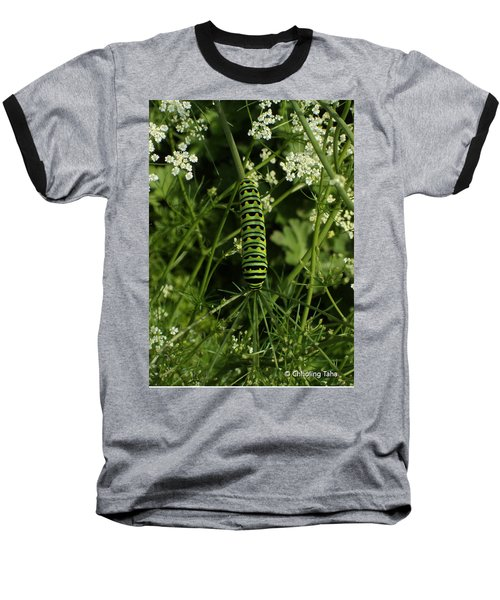 Baseball T-Shirt featuring the painting Black Swallowtail Butteryfly Caterpillar by Chholing Taha