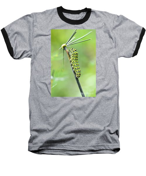Black Swallowtail Caterpillar Baseball T-Shirt