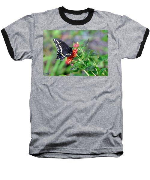 Black Swallowtail Baseball T-Shirt by Kay Lovingood