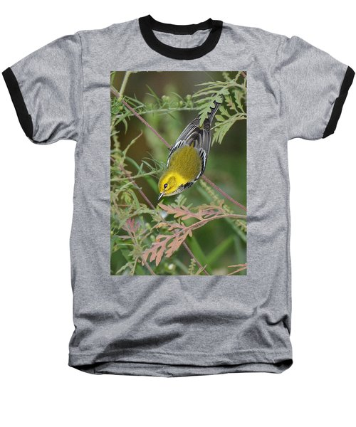 Black-throated Green Intent Baseball T-Shirt