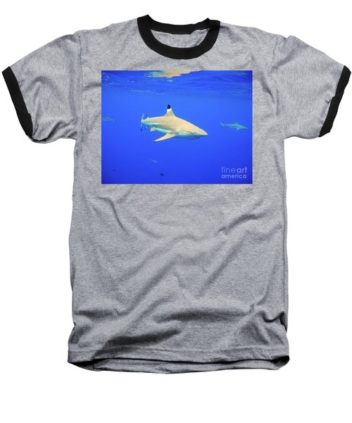 Blacktip Reef Shark Baseball T-Shirt