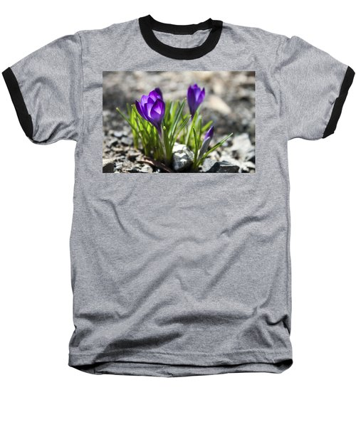 Blooming Crocus #1 Baseball T-Shirt by Jeff Severson