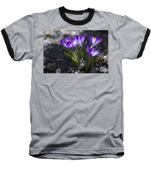 Blooming Crocus #2 Baseball T-Shirt by Jeff Severson