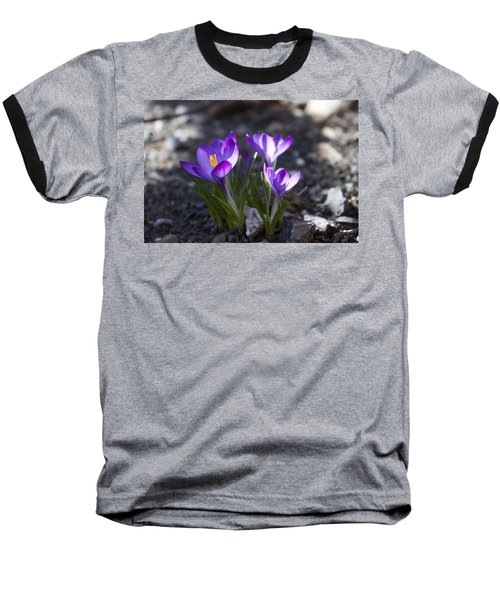 Blooming Crocus #3 Baseball T-Shirt by Jeff Severson