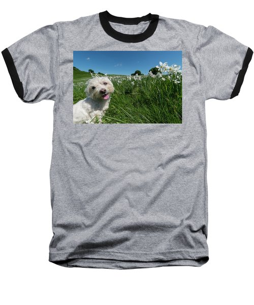 Blooming Daffodils In The Antola Park With Maltese II Baseball T-Shirt