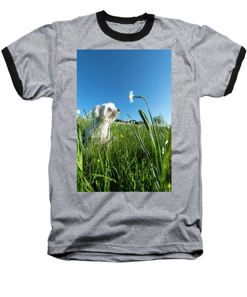 Blooming Daffodils In The Antola Park With Maltese IIi Baseball T-Shirt