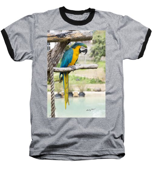 Blue And Gold Macaw Baseball T-Shirt by Ricky Dean