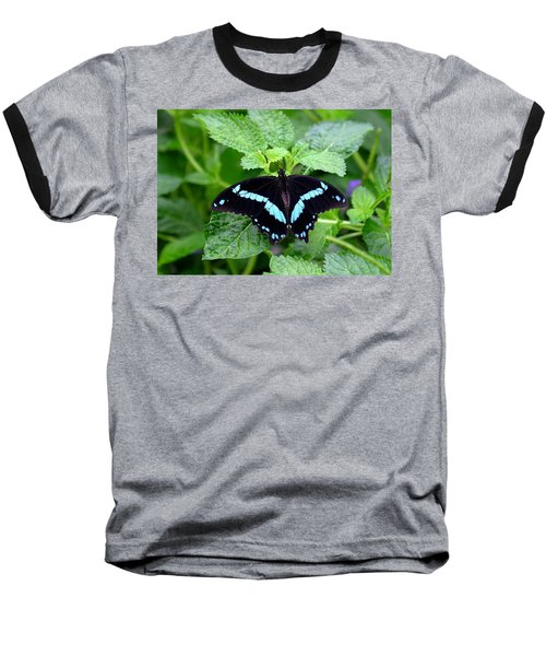 Blue Banded Swallowtail Butterfly Baseball T-Shirt