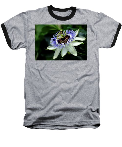 Blue Crown Passion Flower Baseball T-Shirt by Debbie Oppermann