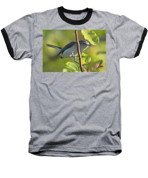Blue Gray Gnatcatcher Baseball T-Shirt