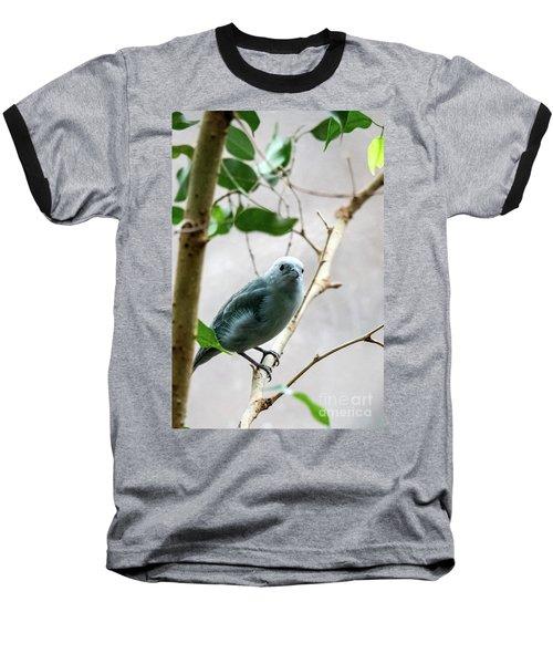 Blue-grey Tanager 2 Baseball T-Shirt