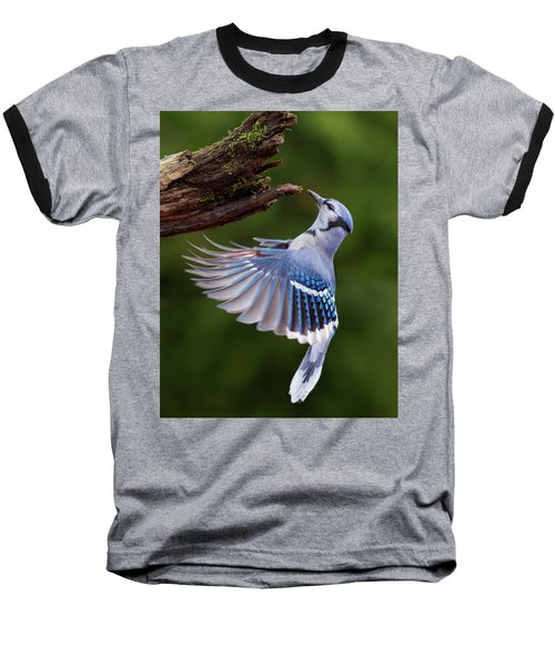 Baseball T-Shirt featuring the photograph Blue Jay In Flight by Mircea Costina Photography