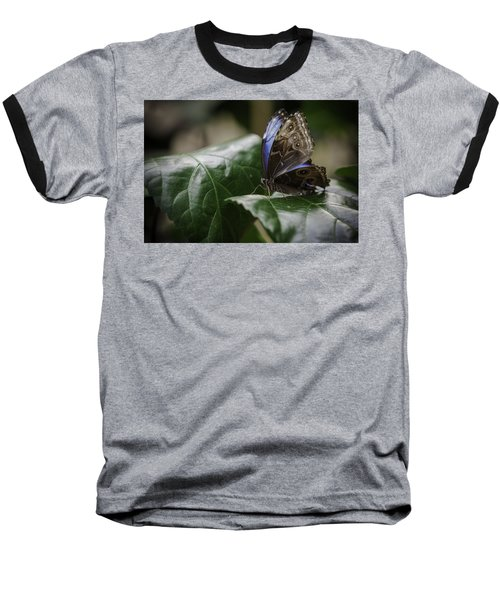Baseball T-Shirt featuring the photograph Blue Morpho On A Leaf by Jason Moynihan