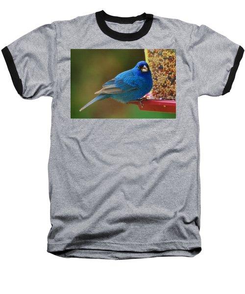 Indigo Bunting Baseball T-Shirt