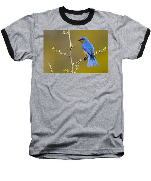 Bluebird Bliss Baseball T-Shirt