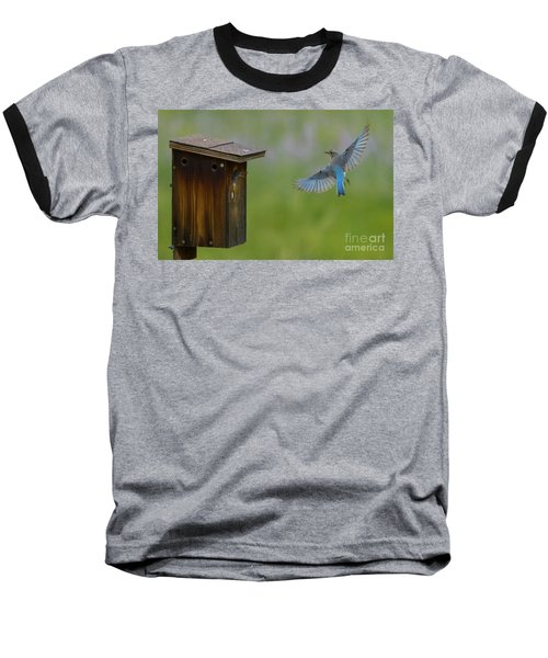Bluebird Feeding Time Baseball T-Shirt