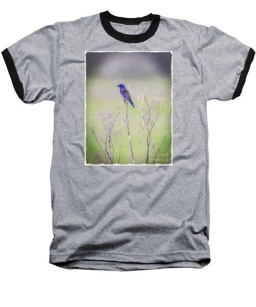 Bluebird On Hemlock Baseball T-Shirt by Mitch Shindelbower