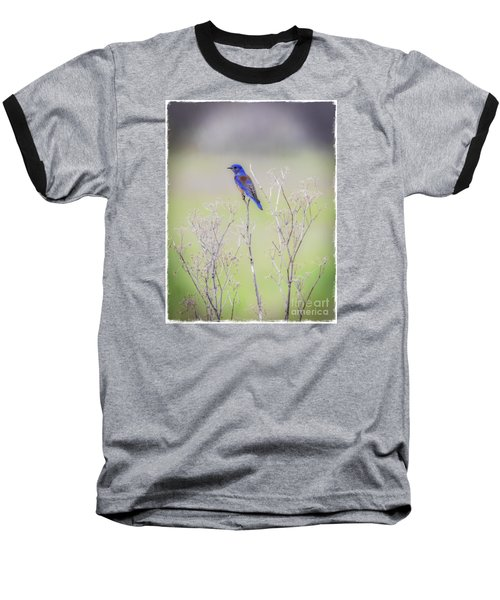 Bluebird On Hemlock Baseball T-Shirt
