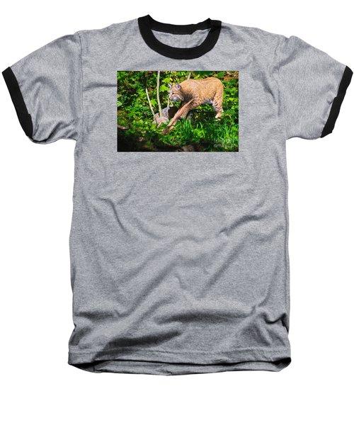 Bobcat At Water's Edge Baseball T-Shirt