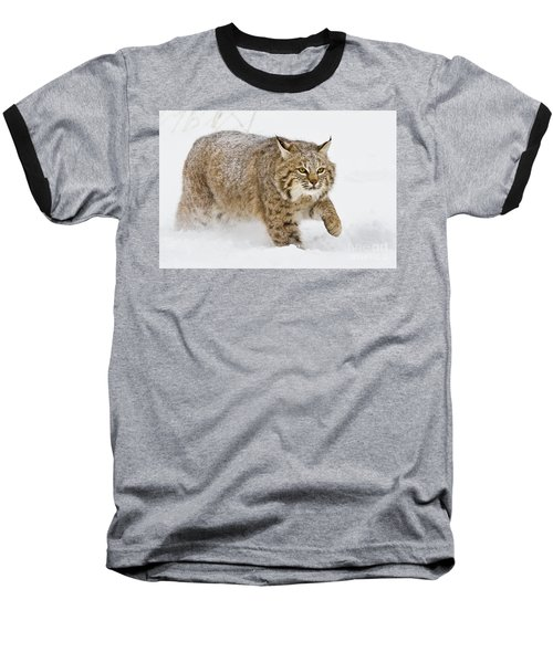 Bobcat In Snow Baseball T-Shirt by Jerry Fornarotto