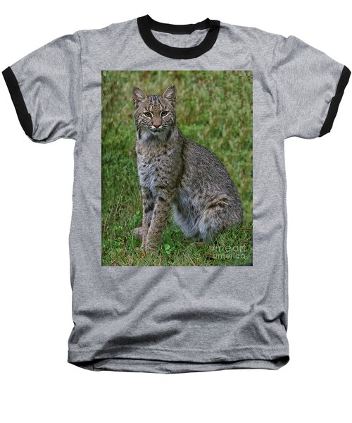 Bobcat On Alert Baseball T-Shirt by Myrna Bradshaw