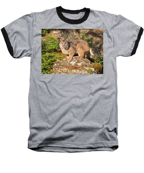 Bobcat On Rock With Tongue Out Baseball T-Shirt