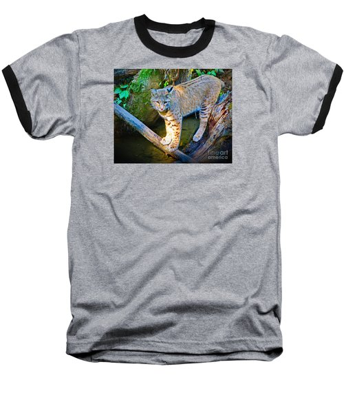 Bobcat Scanning The Water Baseball T-Shirt by Ansel Price