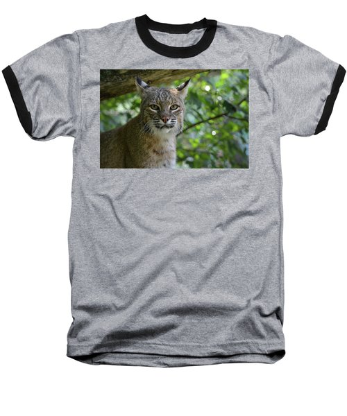 Bobcat Staring Contest Baseball T-Shirt
