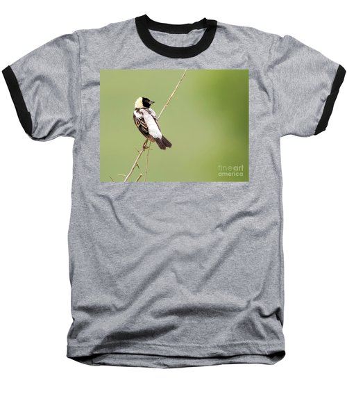 Baseball T-Shirt featuring the photograph Bobolink Looking At You by Ricky L Jones