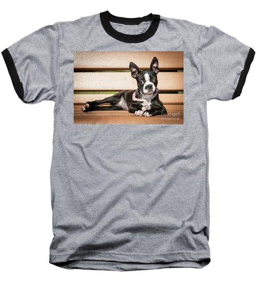 Boston Terrier Puppy Relaxing Baseball T-Shirt by Stephanie Hayes