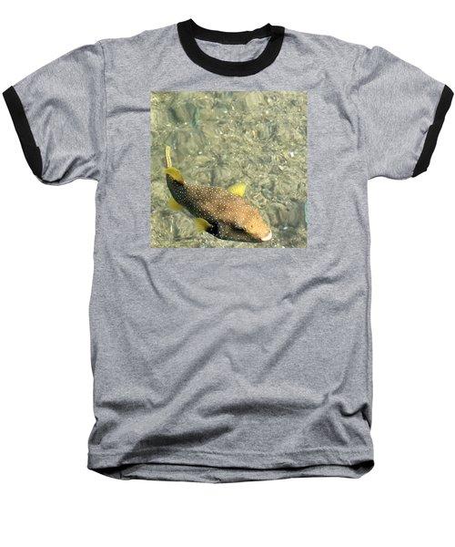 Box Fish - 3 Baseball T-Shirt by Karen Nicholson