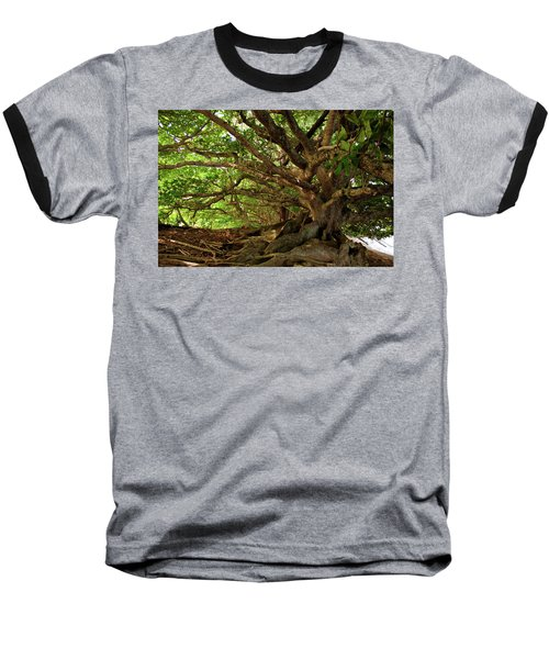 Branches And Roots Baseball T-Shirt by James Eddy