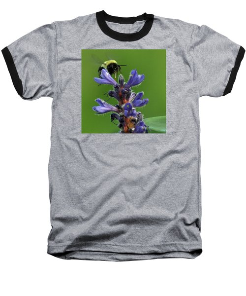 Baseball T-Shirt featuring the photograph Bumble Bee Breakfast by Glenn Gordon