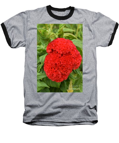 Bright Red Cockscomb Baseball T-Shirt